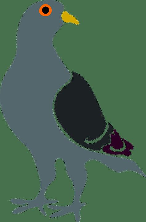Burung Dara Png : burung, Pigeon, Vector, Graphic, Pixabay