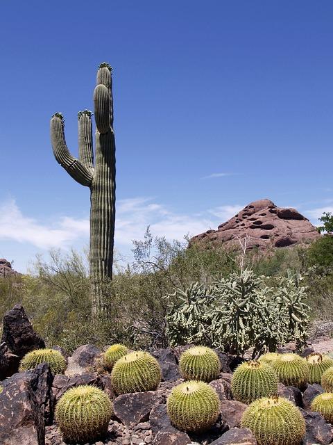 Free photo Cactus Plant Rocks Hill Desert  Free