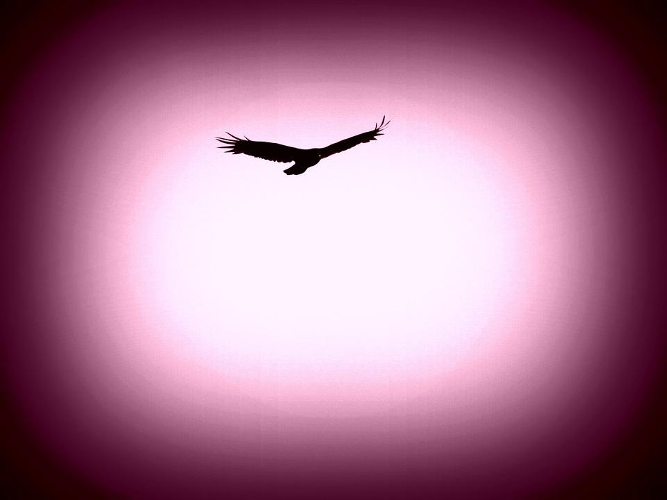 Eagle, Bird, Animal, Bird Of Prey, Feather, Beak, Wing