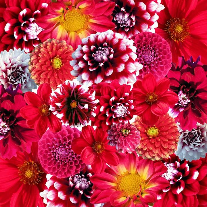Background Wallpaper Hd Fall Fog Autumn Dahlias Flowers 183 Free Photo On Pixabay