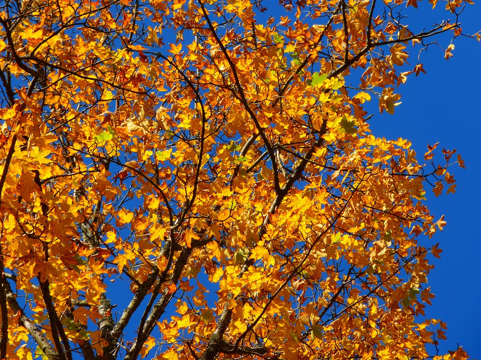 Fall Foliage Deskt Op Wallpaper Free Photo Autumn Colorful Tree Leaves Free Image On
