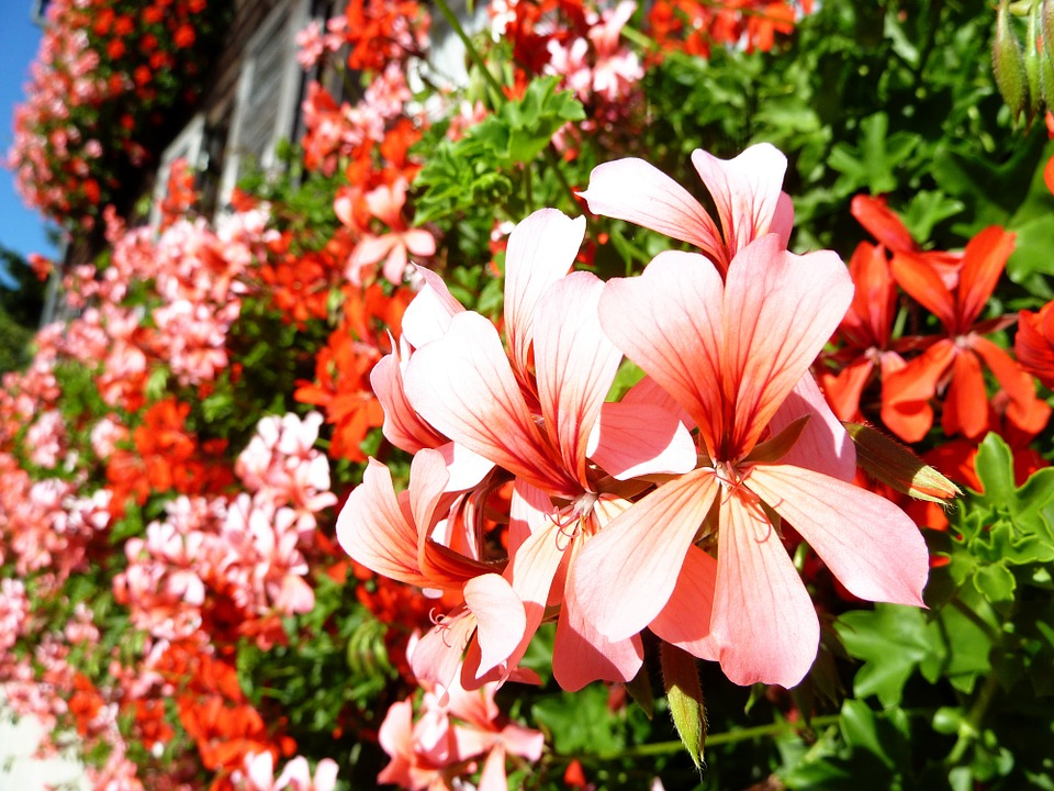 Beautiful Serene Colorful 183 Free Photo On Pixabay