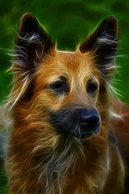Pug Wallpaper Cute Dog Digital Art Fractal 183 Free Image On Pixabay