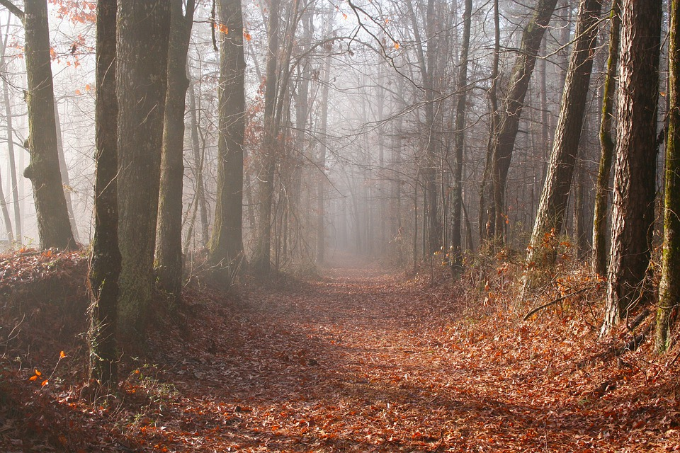 Kentucky Fall Wallpaper 2017 Free Photo Mississippi Forest Woods Fall Free Image