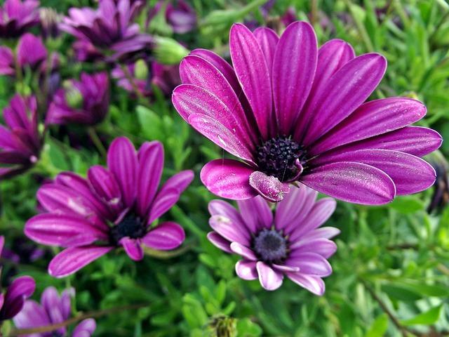 Foto gratis Bunga Aster Bunga Bunga  Gambar gratis di