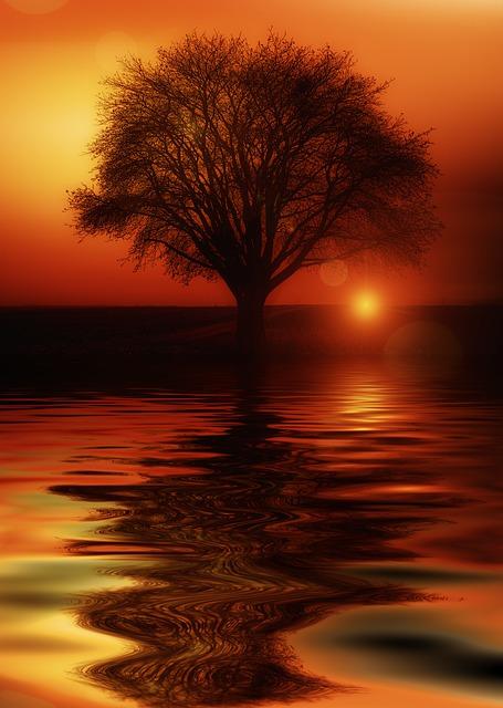 Rose Flower Hd Wallpaper Free Download Free Illustration Tree Mirroring Water High Water