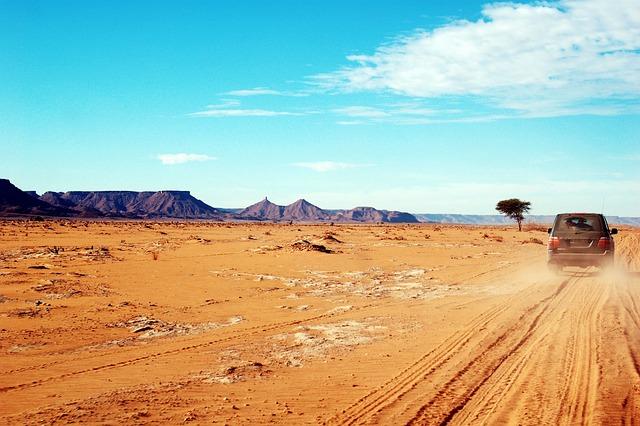 Lion Animal Wallpaper Morocco Africa Rally 183 Free Photo On Pixabay