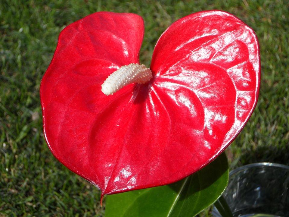 heart shape shaped flower