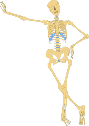 Skeleton Human Skull · Free vector graphic on Pixabay