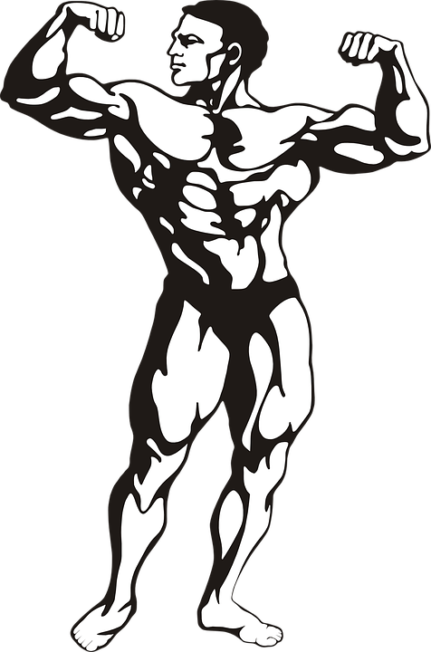 Bodybuilder Muscles Man · Free vector graphic on Pixabay