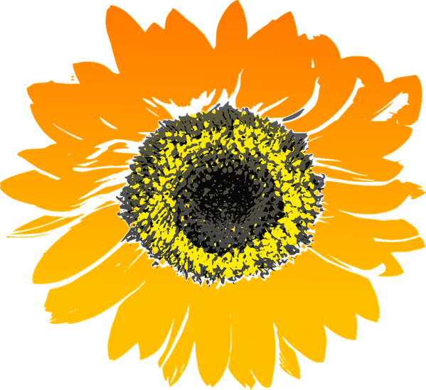 free vector graphic sunflower