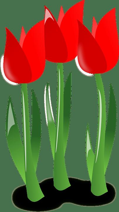 vetorial gratis tulipas