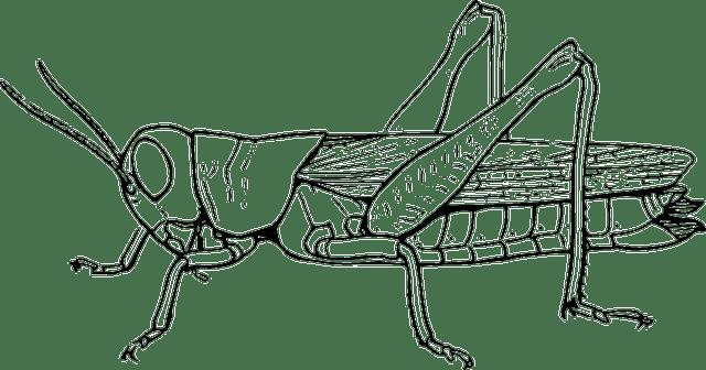 Grasshopper Locust Hopper · Free vector graphic on Pixabay