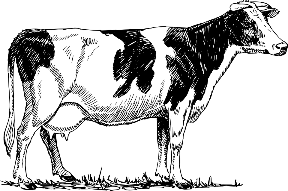 Rinder Kuh Tier · Kostenlose Vektorgrafik auf Pixabay