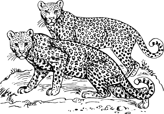 Leopards Wildcats Maneaters · Free vector graphic on Pixabay