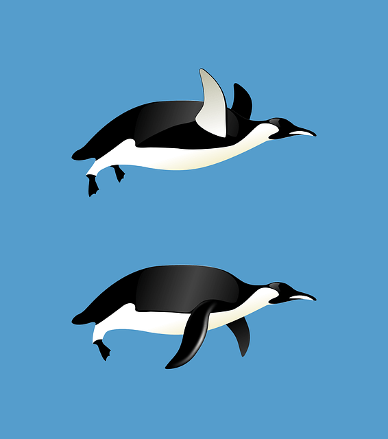 Cat Animal Wallpaper Penguins Flying Animal 183 Free Vector Graphic On Pixabay