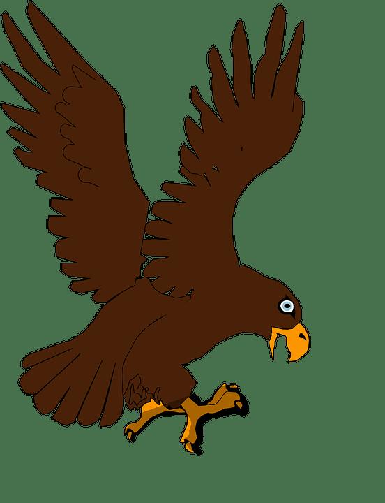 Gambar Elang Animasi Png