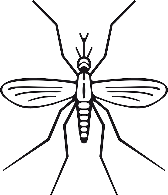 free vector graphic insect malaria