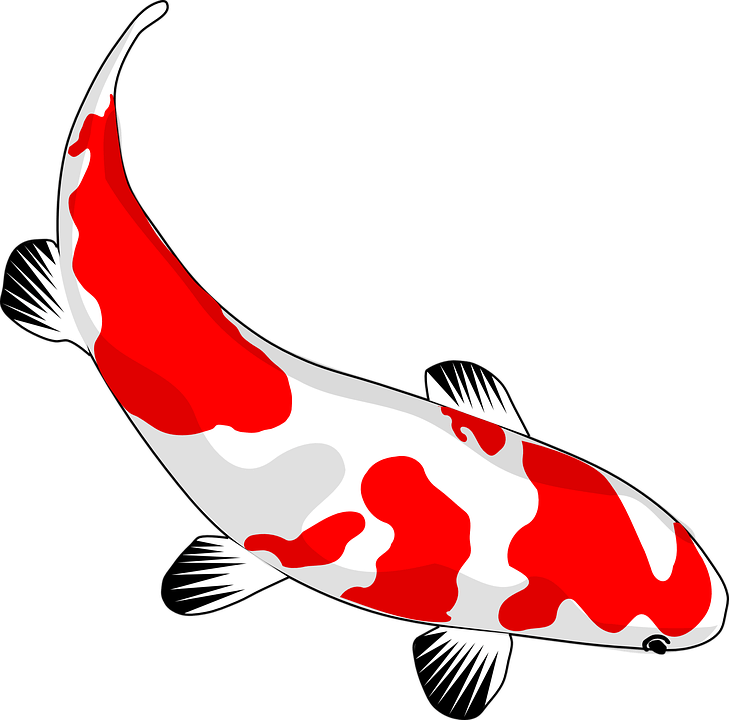 200 koi fish pictures