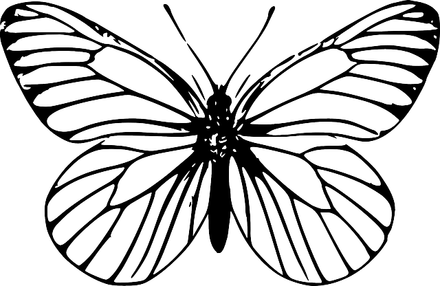 Butterfly Insect · Free vector graphic on Pixabay