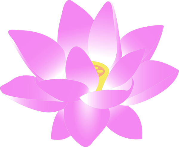 flower water lily free vector