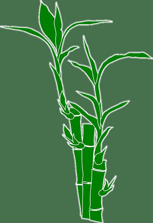Bambu Tanaman Alam  Gambar vektor gratis di Pixabay