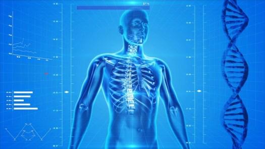 Scheletro Umano, Corpo Umano, Anatomia, A Raggi X