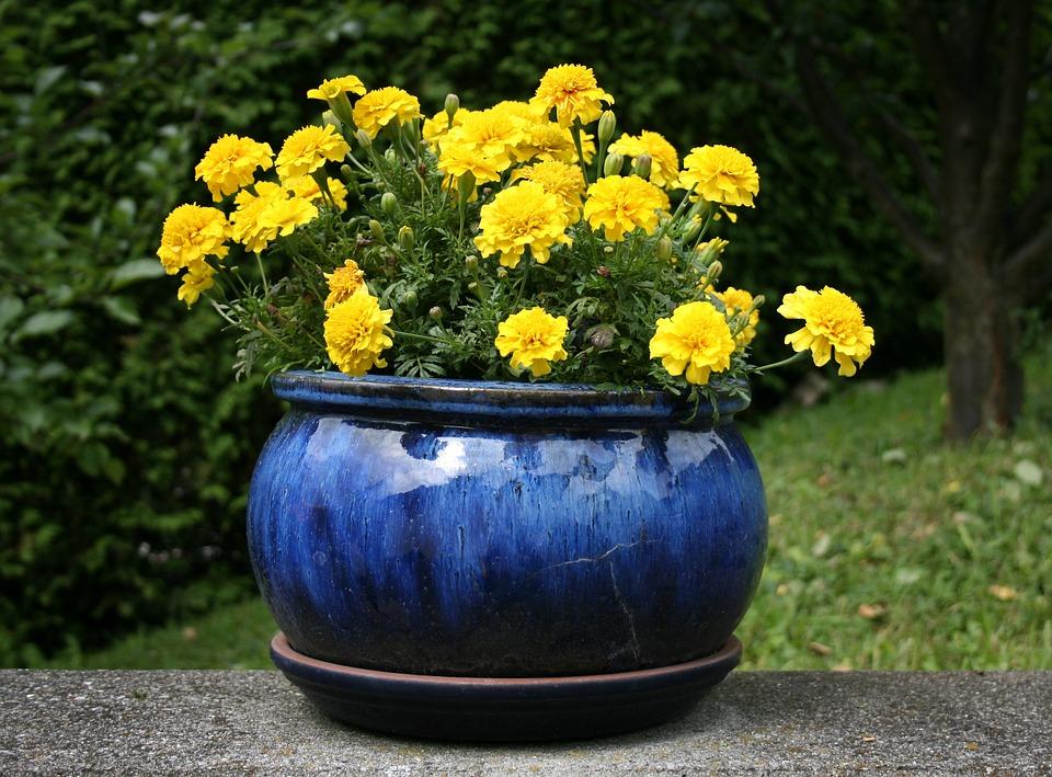 Photo Gratuite Fleurs Pot Fleurs Jaune Bleu Image