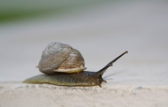 Snail, Slow, Moving, Shell, Slimy