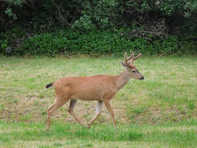 Animal Desktop Wallpaper Deer Running Field Nature 183 Free Photo On Pixabay