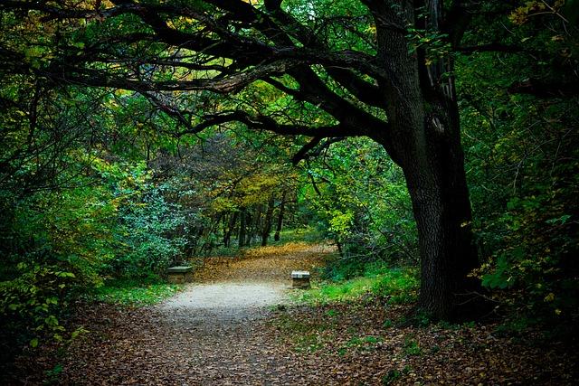 Christian Wallpaper Hd Free Photo Walk Road Forest Wood Autumn Free Image