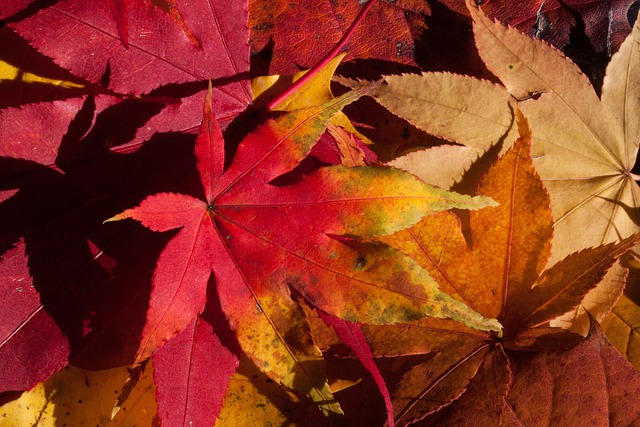 Fall Foliage Computer Wallpaper Free Photo Autumn Fall Foliage Golden Autumn Free