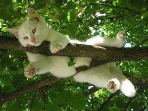 猫, 自然, リラックス, リラクゼーション, 残り, お気に入りの場所