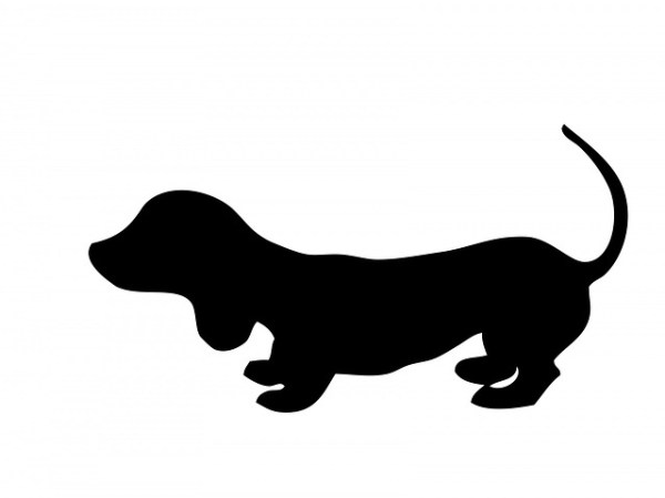 dog dachshund puppy free