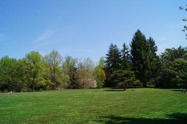 park yard trees free