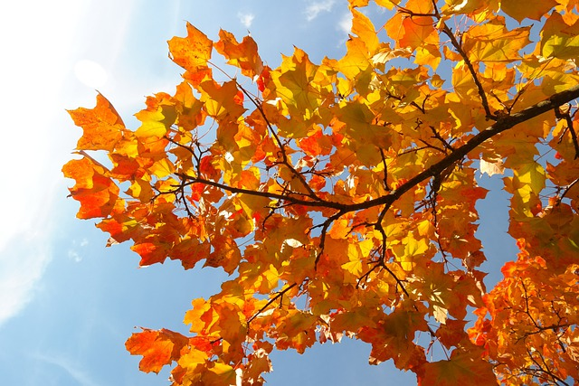 Hd Fall Wallpapers 1080p Kostenloses Foto Bl 228 Tter Herbst Herbstf 228 Rbung Ast
