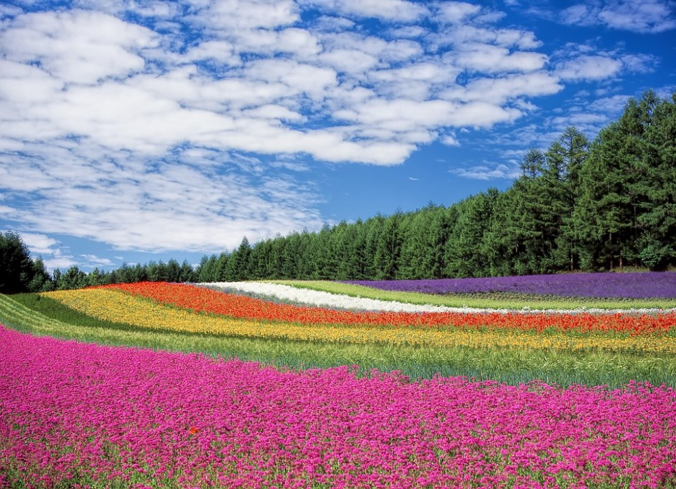 Flower Field, Flowers, Colors, Many, Blossom