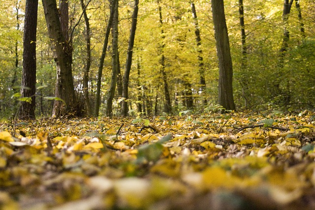 Creative Fall Wallpaper Free Photo Forest Floor Leaves Autumn Free Image On
