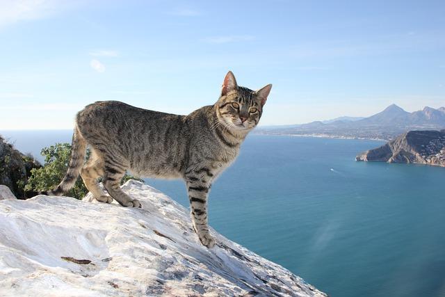 Cute Kitten Wallpaper Free Cat Feline Calpe 183 Free Photo On Pixabay