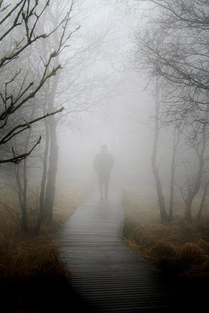 Fog Autumn Nature Free Photo On Pixabay