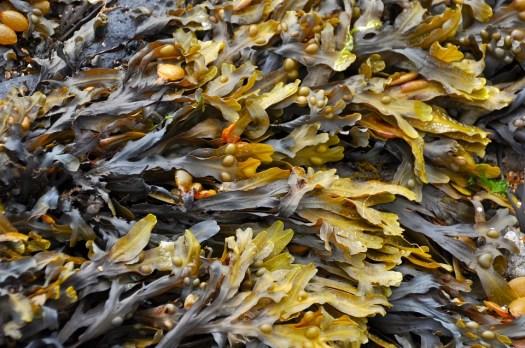 Alga Marina, Spiaggia, Alghe Sulla Spiaggia