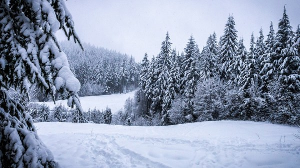 winter forest snowy free