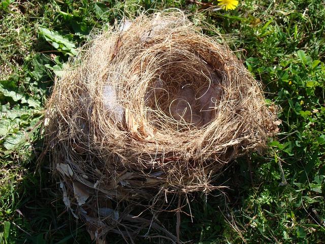 Kostenloses Foto Vogelnest Nest Tier Stroh Gras  Kostenloses Bild auf Pixabay  274582