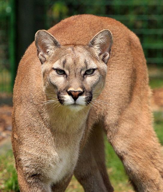 Bilder Zum Ausdrucken Jaguar