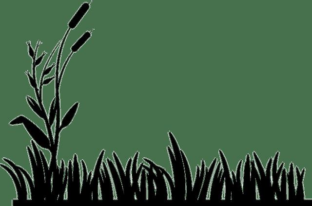 Rohrkolben Gras Rasen · Kostenlose Vektorgrafik auf Pixabay