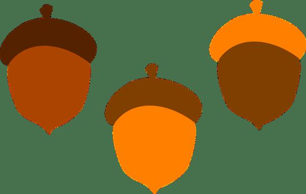 acorn brown fall free vector