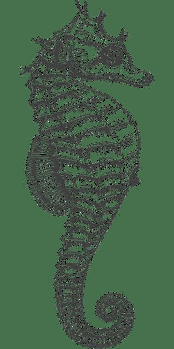Image vectorielle gratuite: Hippocampe, D'Argent, Séchées