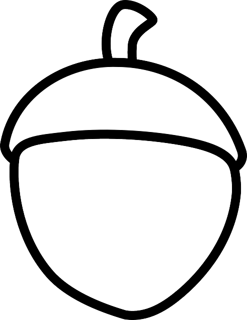 free vector graphic acorn sketch