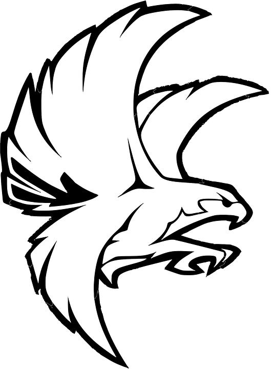 Burung Elang Vector : burung, elang, vector, Burung, Falcon, Elang, Gambar, Vektor, Gratis, Pixabay