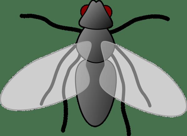 fly cartoon isolated free vector